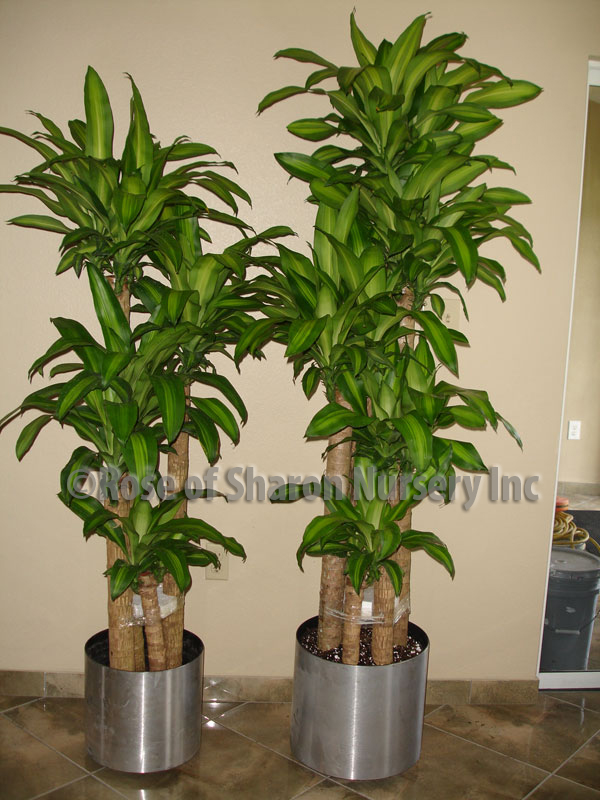 enchanting 20 office plants no light design decoration of ForOffice Plants No Natural Light